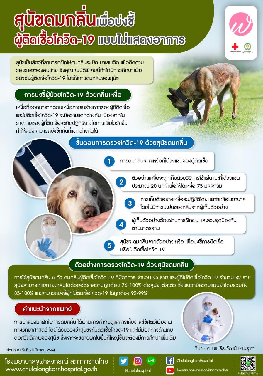 สุนัขดมกลิ่นเพื่อบ่งชี้ผู้ติดเชื้อโควิด-19 แบบไม่แสดงอาการ